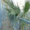 Appartement 2 pièces Juan les Pins - Photo 9