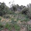 Terrain terrain 43840 m² Roquessels - Photo 3