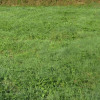 Terrain terrain à bâtir breuillet - 1004 m² Breuillet - Photo 3