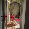 Maison / villa maison 8 pièces Nizas - Photo 14