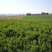 Vente terrain Mirande
