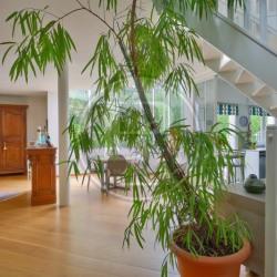 Architektenhaus 7 Zimmer