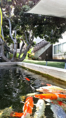 Maison individuelle F4/5 avec jardin