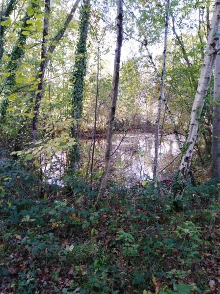 Vente terrain Combourg 23 500€ - Photo 1