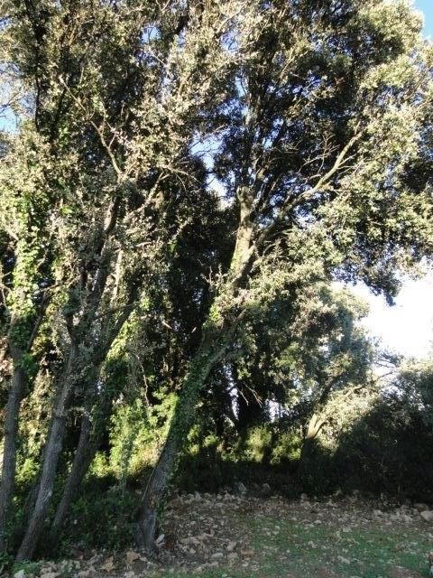 Venta  terreno Cournonsec 180000€ - Fotografía 5