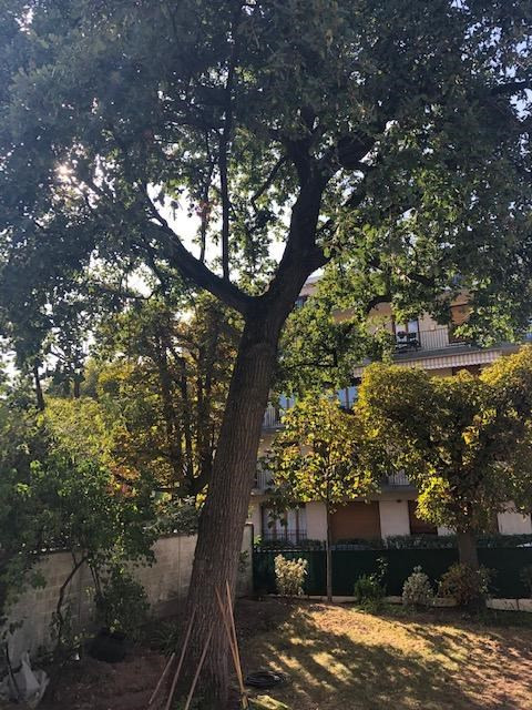 Location maison / villa Le vesinet 2 963€ CC - Photo 2