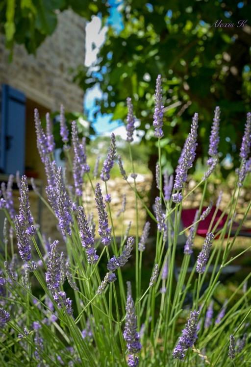 Vente de prestige maison / villa Saint-césaire-de-gauzignan 179000€ - Photo 2