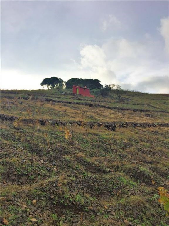 Vente terrain Banyuls sur mer 44000€ - Photo 1