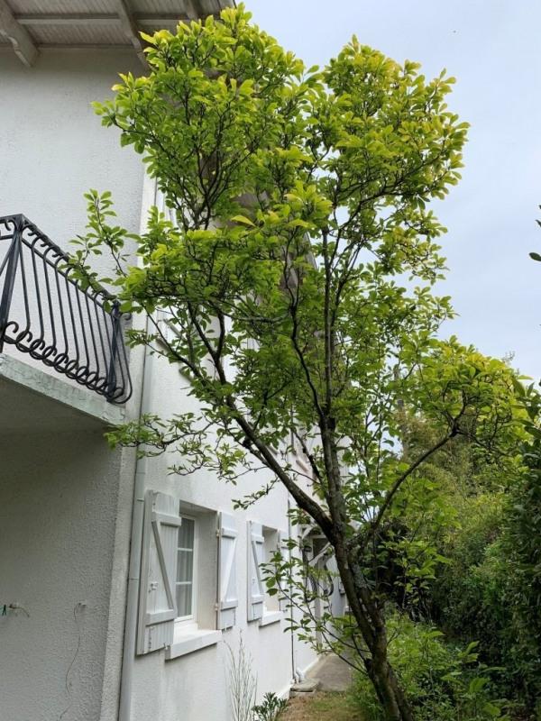Deluxe sale house / villa Arcachon 863000€ - Picture 9