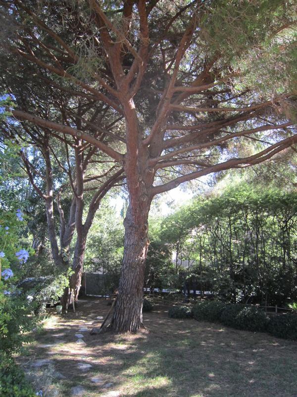 Location vacances maison / villa Cavalaire sur mer 1000€ - Photo 17