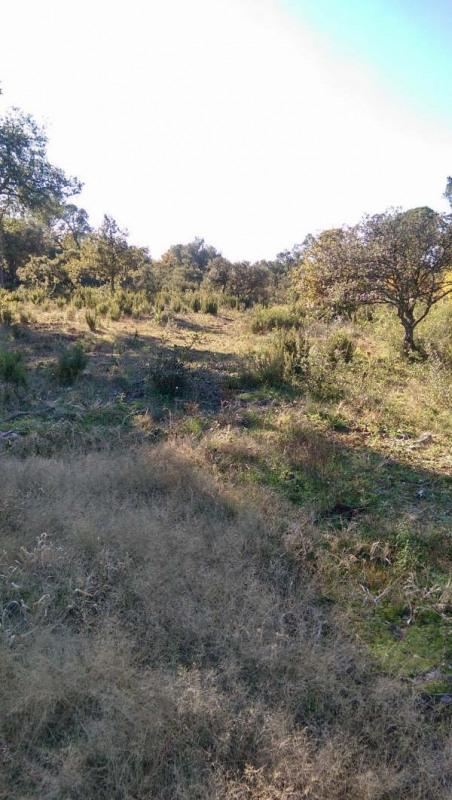 Vente terrain Le cannet des maures 127000€ - Photo 2