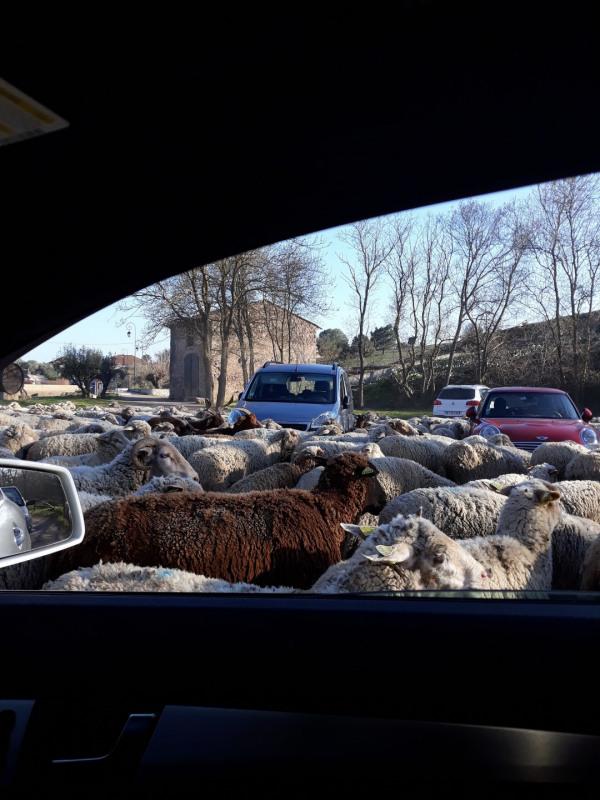 Location vacances maison / villa Roquebrune sur argens 1650€ - Photo 25