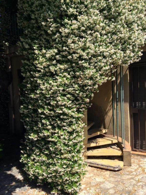 Verkoop  huis Avignon 305000€ - Foto 10