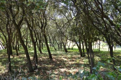 Piolenc terrain 789 m²
