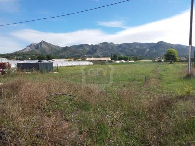Terrain Agricole de 6000m² à louer sur AUBAGNE 13400