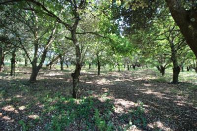 A vendre terrain à bâtir viabilisé - 660 m² à serres