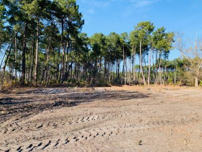 Terrain Biscarrosse 1231 m²