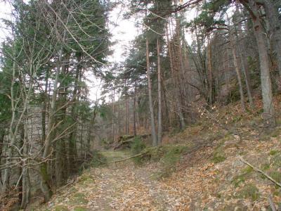 Terrain boisé sur massif de haute ardèche