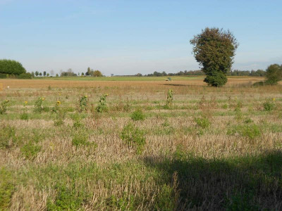 Vente terrain Corme Royal (17600)