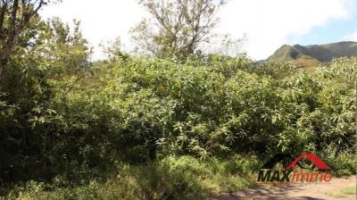 Terrain constructible la plaine des palmistes - 2244 m²