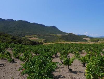 Vineyard 5 rooms