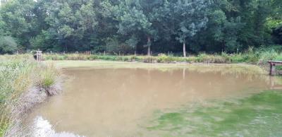 parcelle boisée avec étang