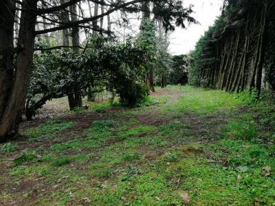 Terrain Cestas 1085 m²