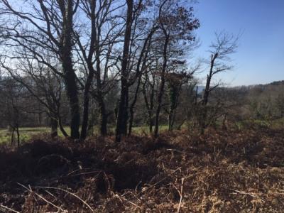 Rare terrain en partie constructible avec parcelles de bois