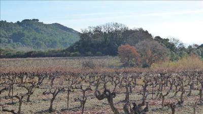 Wine-growing land
