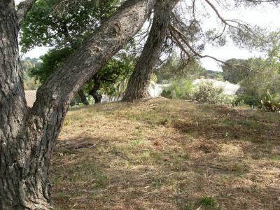 Vente terrain Frejus (83600)