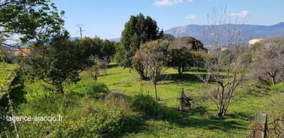 Terrain 803 m² Hors Lotissement à Bastelicaccia-Église