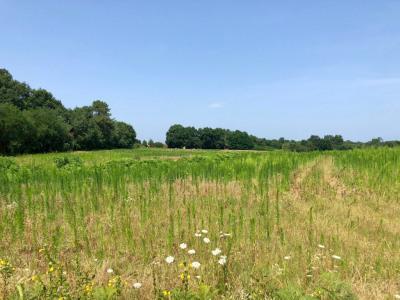 Domaine agricole Meilhan 85576 m²