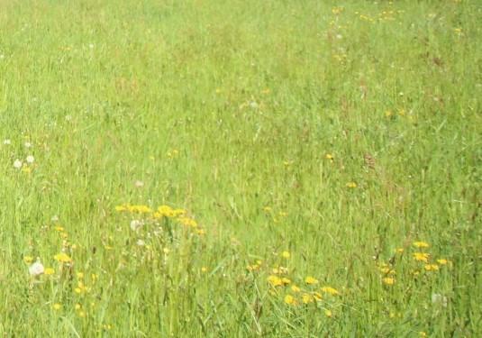 Vente terrain La tour du pin 55000€ - Photo 1