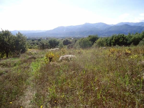 Vente terrain Ceret 38500€ - Photo 1