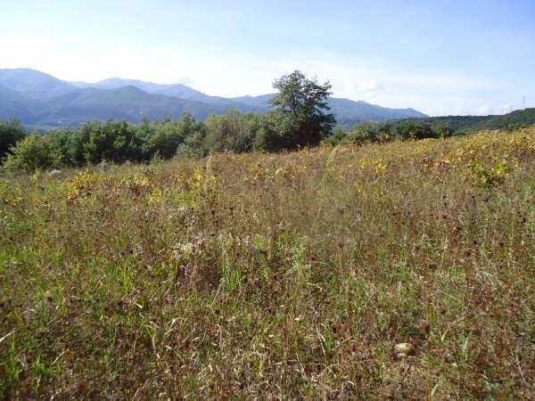 Vente terrain Ceret 38500€ - Photo 2