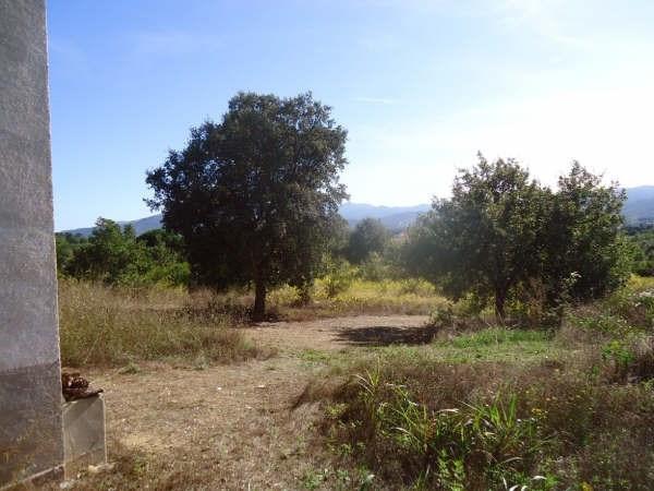 Vente terrain Ceret 38500€ - Photo 3