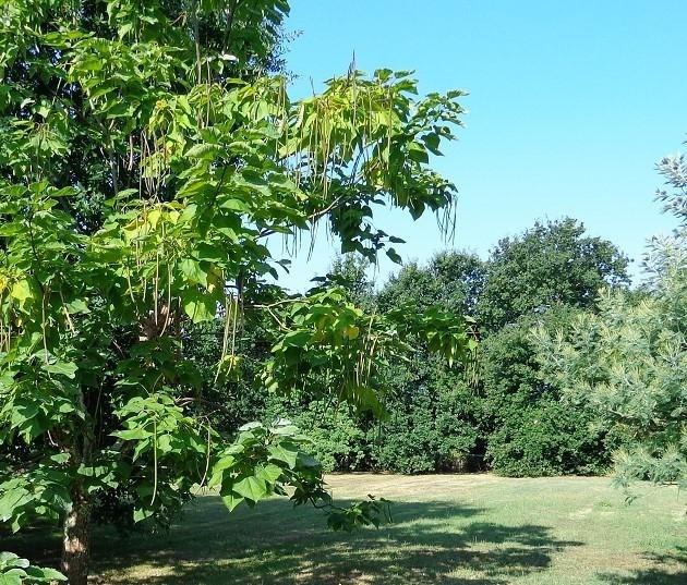 Vente terrain Gujan mestras 230000€ - Photo 1