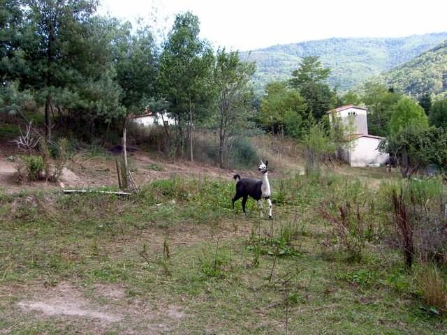 Vente terrain Prats de mollo la preste 150000€ - Photo 5