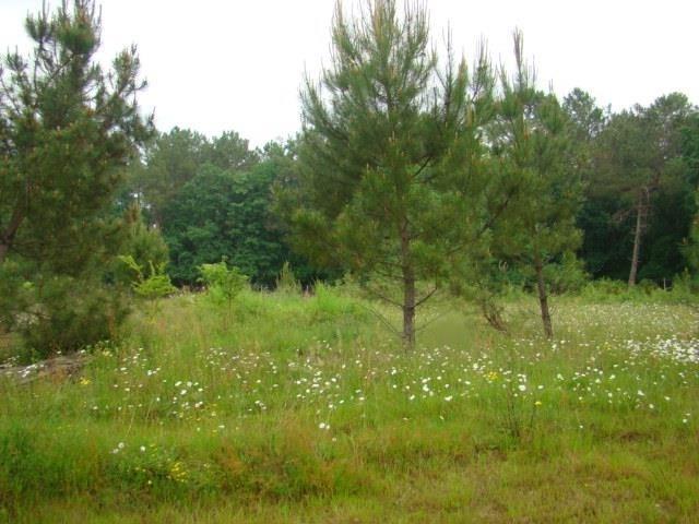 Verkoop  stukken grond Montpon menesterol 28000€ - Foto 3