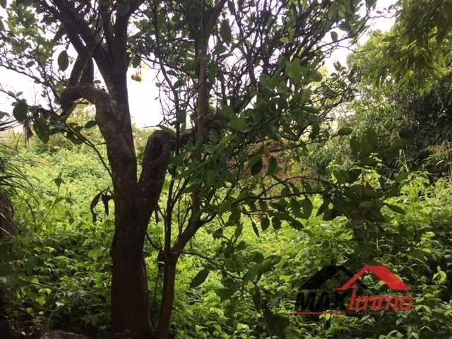 Vente terrain Cilaos 96050€ - Photo 5