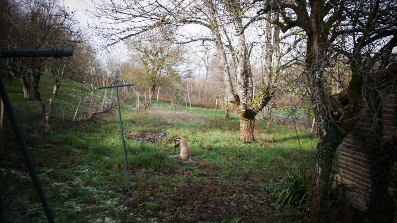 Vente maison / villa Rabastens 120000€ - Photo 9