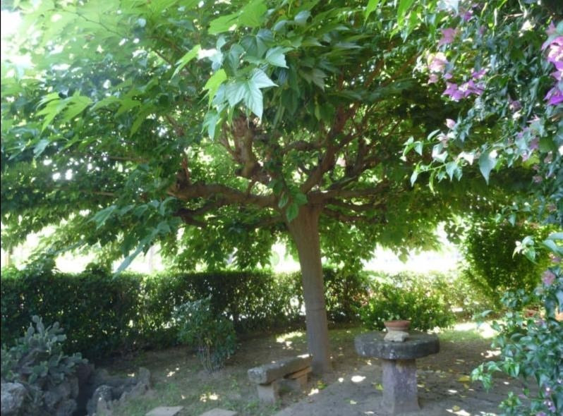 Vente maison / villa Hyeres 392900€ - Photo 6