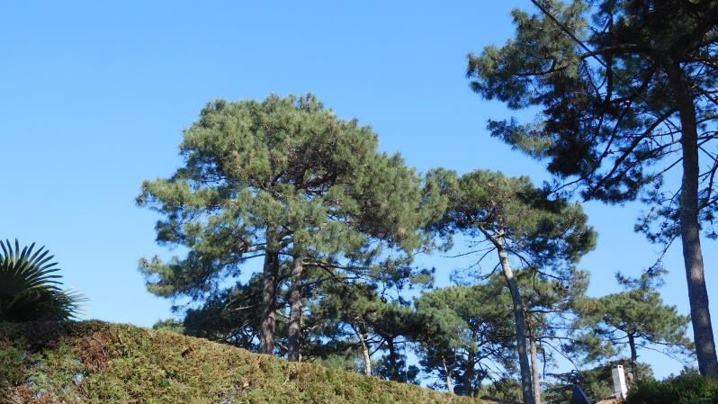 Sale apartment Arcachon 475 000€ - Picture 8