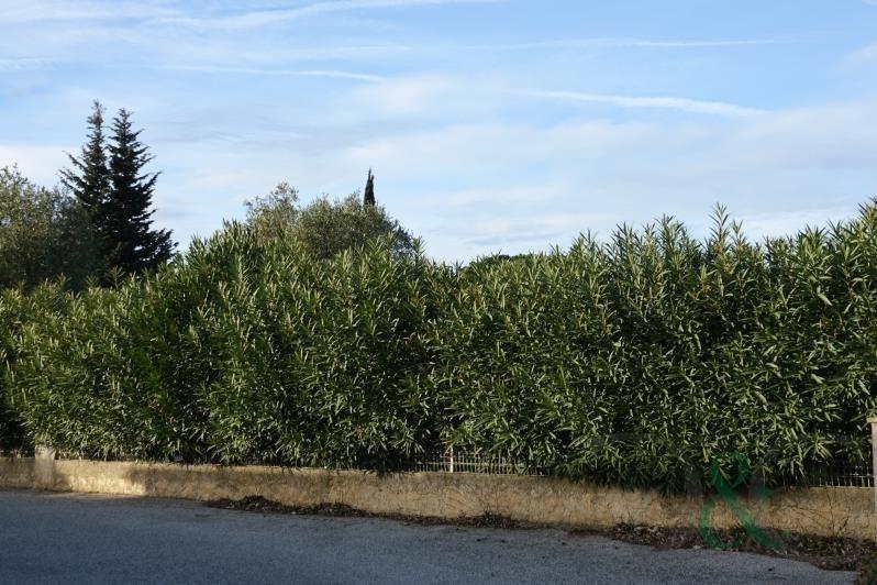 Vente terrain Bormes les mimosas 286200€ - Photo 3