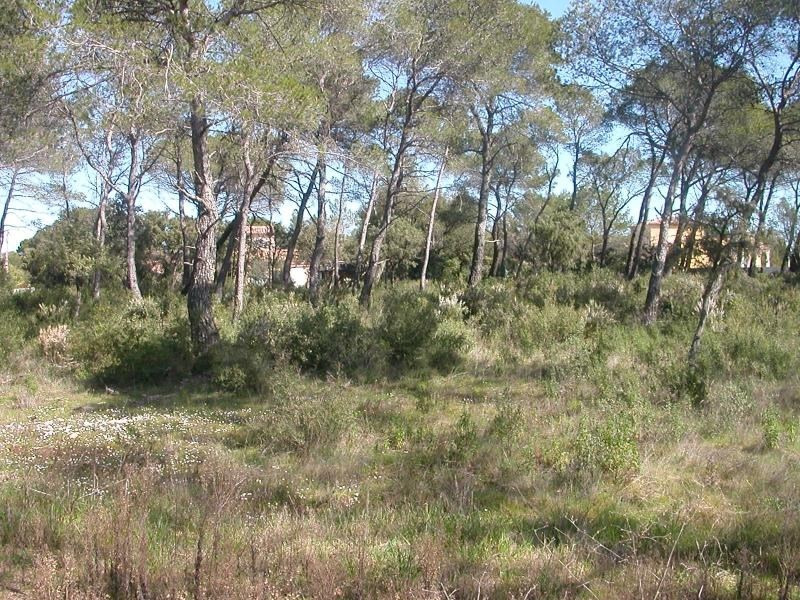 Vente terrain Le cannet des maures 169 000€ - Photo 6