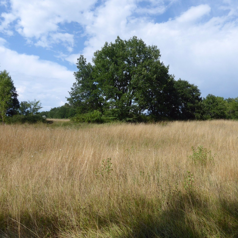 Vente terrain Vallon-pont-d'arc 400 000€ - Photo 4