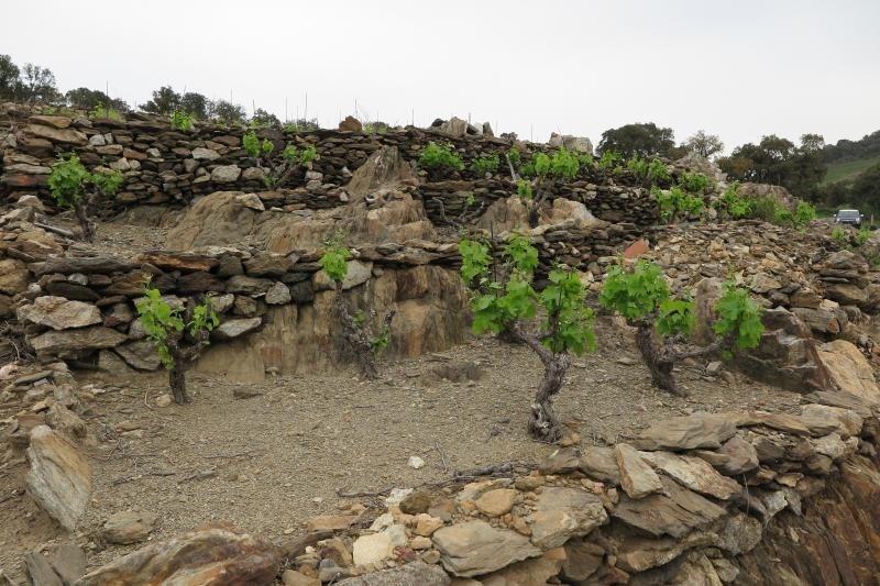 Vente terrain Collioure 70000€ - Photo 3