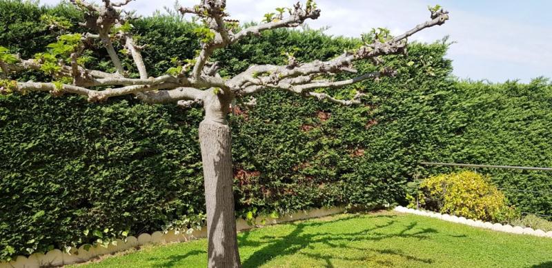 Vente maison / villa Pietrosella 390000€ - Photo 31