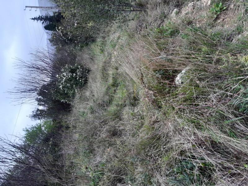 Vente terrain Roquevaire 45000€ - Photo 6