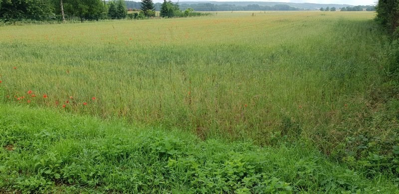 Vente terrain Evry 55 000€ - Photo 2